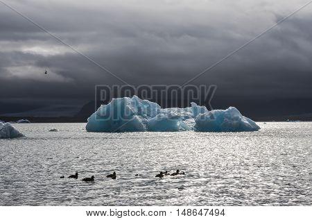 Ice blocks and ducks at the lake of Jokulsarlon glacier lagoon in the Vatnajokull National Park Iceland.