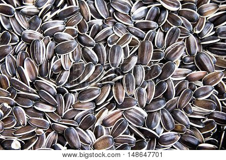 sunflower seeds a lot as background close