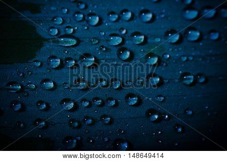 water drop on fresh blue leaf with blurred background
