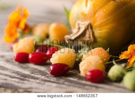 Colorful autumn decoration of pumpkins yellow raspberries dogwood and marigold. Thanksgiving day autumnal still life. Autumn nature harvest decoration.