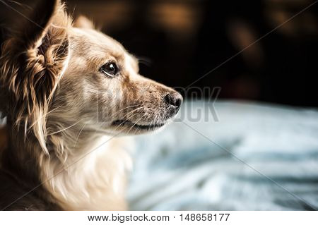 thoughtful, beautiful dog looking outside to the horizon