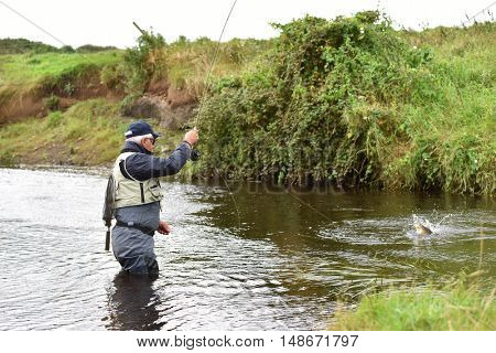 Fly-fisherman catching trout in irish river