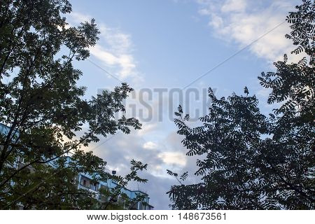 beautiful leaves on a tree against clear blue sky