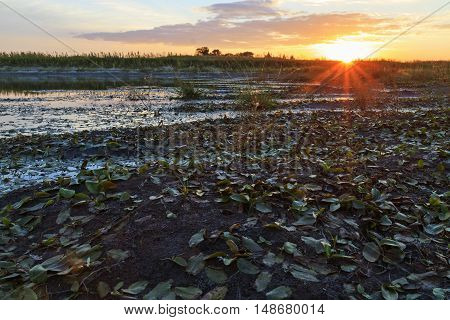 sunset on the banks of overgrown swamp, sun