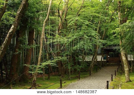 Kyoto , Japan September 17, 2016:This temple is the Jizo-in Temple in Kyoto.Jizo-in Temple is also known as the temple of the alias bamboo.