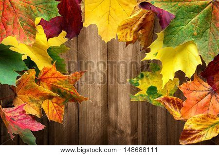 Colorful maple leaves in autumn frame a wood planks background