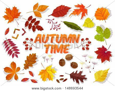 Autumn time. Color autumn leaves on white background. Fall leaf set. Vector illustration