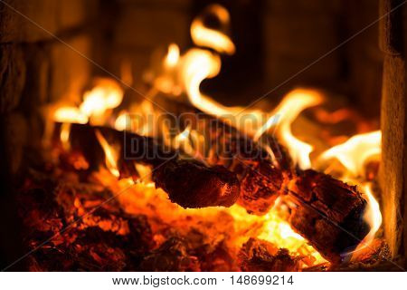 wood burning firewood in the stone oven