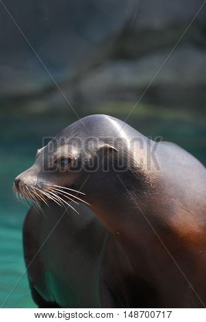 Cute look at a playful sea lion.