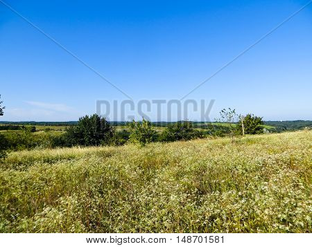 Wide green meadow with the wild flowers