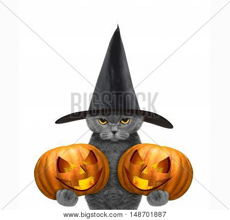 Cute cat in a costume with two halloweens pumpkins -- isolated on white