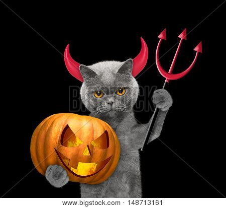Cat with pumpkin in devils costume for Halloween -- isolated on black