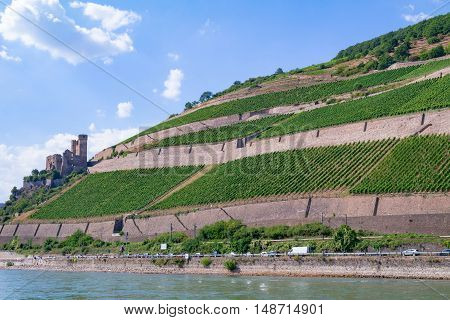 The ruins of a medieval fortress (castle) on the cliff surrounded by green vineyards - view from the Rhine river