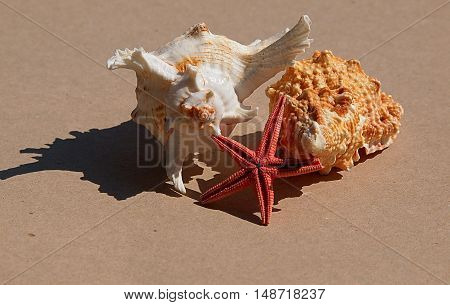 Shells and starfish. Lodz, Poland August 29, 2016 Shells and starfish from the Baltic Sea.