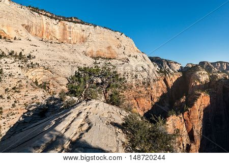 On the top of Angels Landing mountain at Zion National Park Utah USA