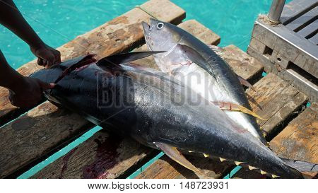 Yellow Fins Tuna