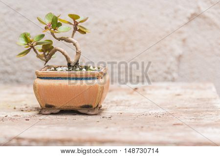 Trees in small pots A cement on a wooden table background.