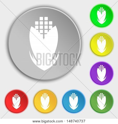 Corn Icon Sign. Symbol On Eight Flat Buttons. Vector