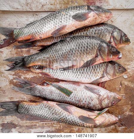 Fresh raw fish crucian - river carp at the street market