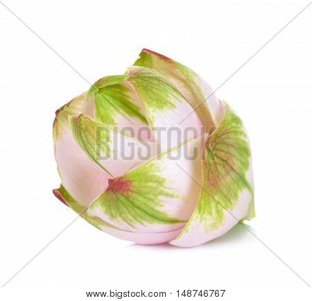 Siam Tulip Flower Isolated On White Background