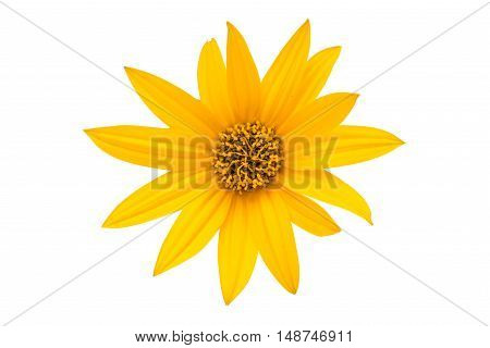 daisy yellow flower isolated on white background