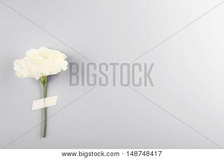 Eustoma flower isolated on white