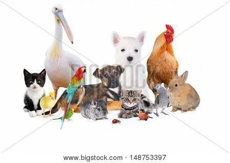 group of different animals on white background