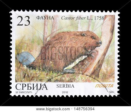 SERBIA - CIRCA 2016 : Cancelled postage stamp printed by Serbia, that shows Eurasian beaver.