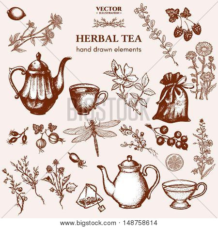Herbal tea collection hand drawn ink vector