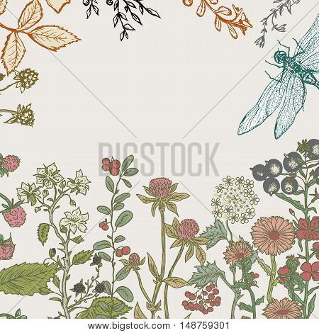 Herbs and wild flowers. Vector seamless floral border. Botanical Illustration engraving style.