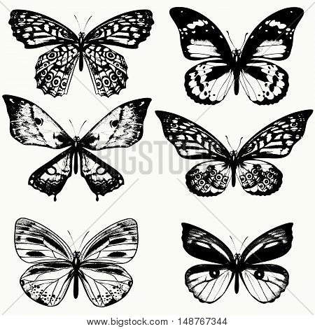 A collection of vector realistic butterflies in vintage style