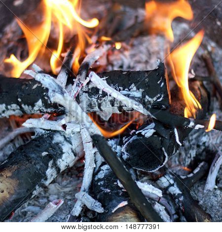 burning wood in a brazier / preparation for the barbecue coals