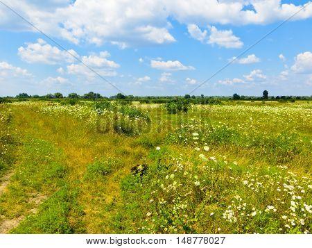 Wide green meadow under the blue sky