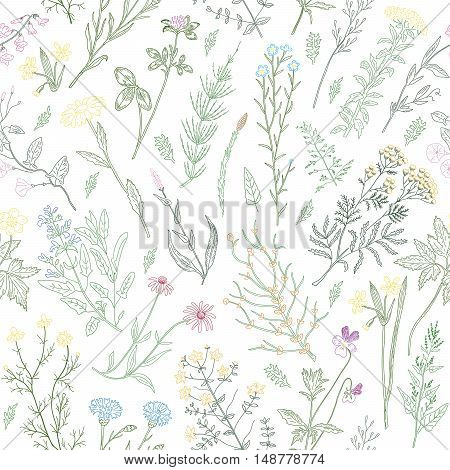Hand drawn sketch variegated herbs and flowers vintage seamless pattern. Vector illustration background.
