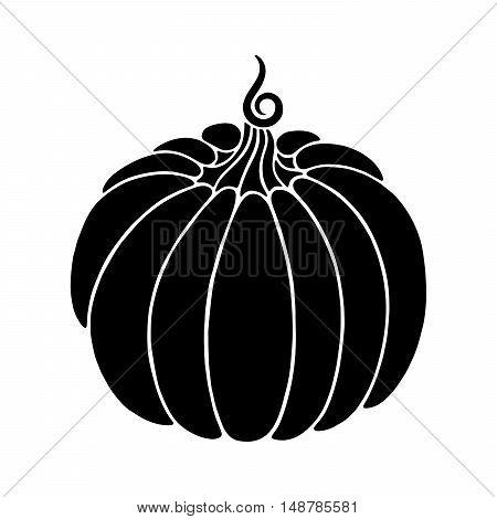 Decorative pumpkin. Harvest Thanksgiving illustration. Isolated vector image.