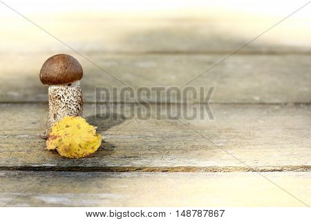 Fresh edible mushroom standing on a wooden surface hiding behind autumn leaf / appetizing delicacy under cover