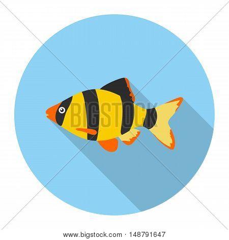 Barbus fish icon flat. Singe aquarium fish icon from the sea, ocean life flat.