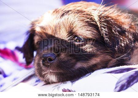 Little sleepy puppy resting under warm sunshine