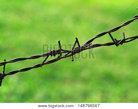 rusty metal barbed wires with a lwan in the background