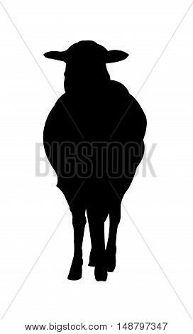 Sheep Silhouette on White Background. Isolated vector illustration animal theme.