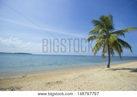 A beautiful palm tree on the Passikudah Beach (Sri Lanka).