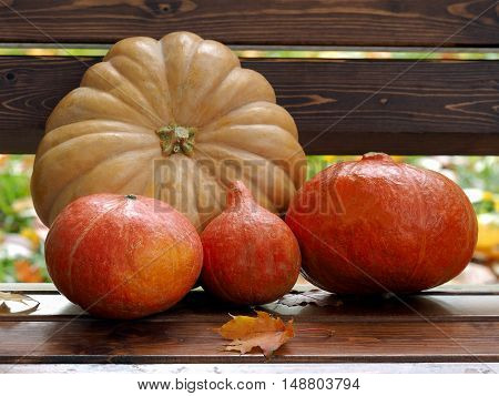 Pumpkins lying on a wooden bench. Autumn leaves