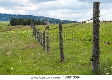 Fence with barbed wire. Fence in the field. Meadow grass with flowers.