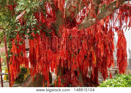 Tree with a lot of small red inscribed wish tapes next to chinese temple