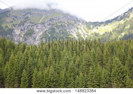 Green trees with beautiful mountains near Berwang Tirol Austria