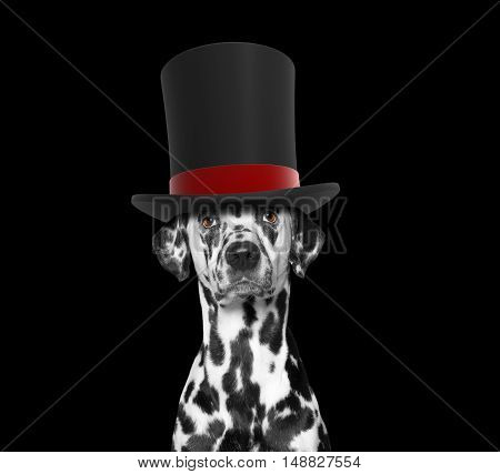 Dog in a high hat cylinder -- isolated on black