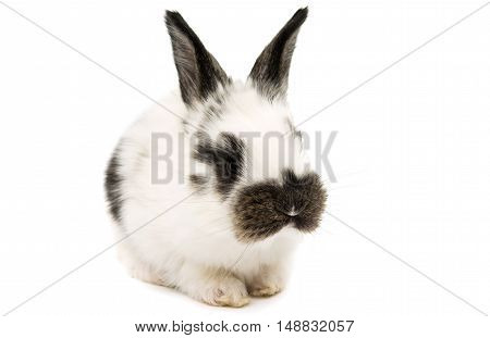 fluffy little rabbits on a white background