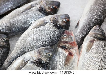 Fresh Sardines on Fish Market in Lisbon. Portugal