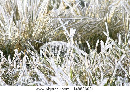 icy morning, beautiful icy frost in the fields