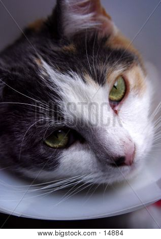 Kitty In A Cone